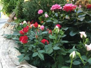 fleuriste montpellier par nature (14)